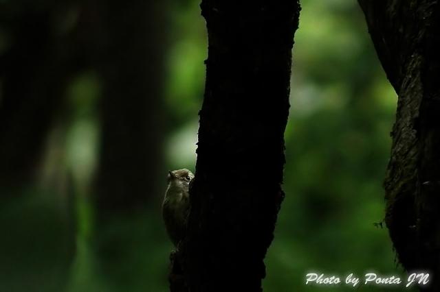 bird1406-0006a.jpg