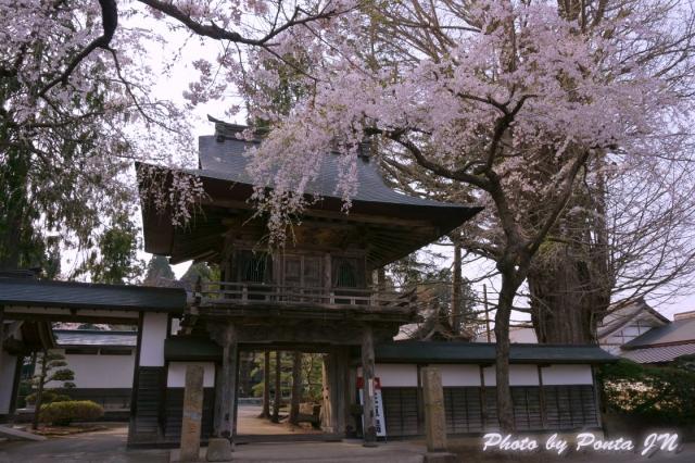 katakuri140427-0021a.jpg