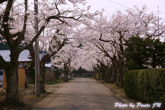 katakuri140427-0023.jpg