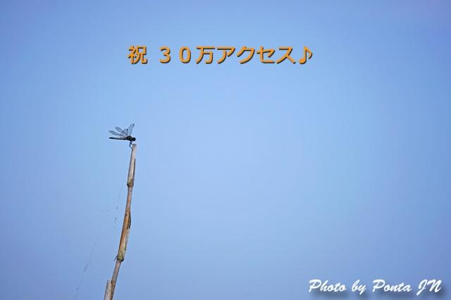 orei1407-0008.jpg