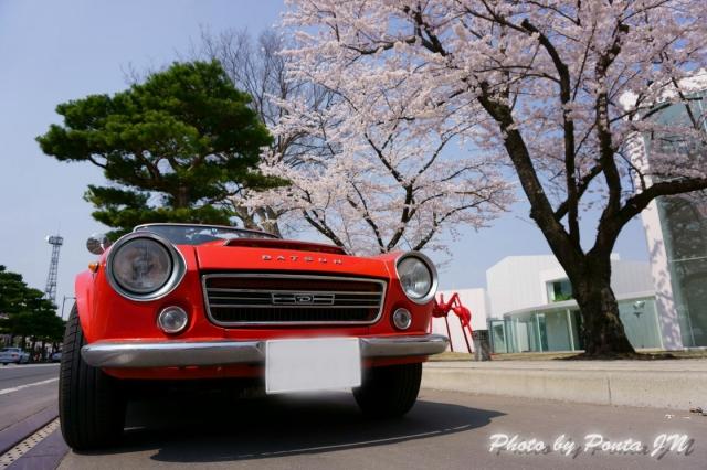 towadasakura14-0011a.jpg