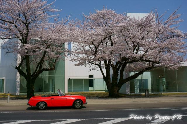 towadasakura14-top.jpg