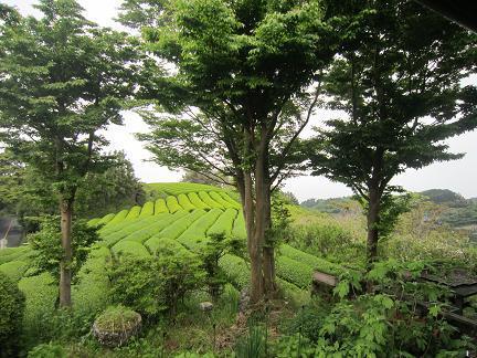 日本平と茶畑