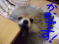 snap_pomemochi_20144617142.jpg
