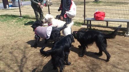 黒犬祭り8