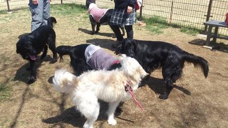 黒犬祭り9
