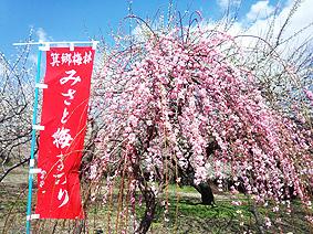 のぼり20140325