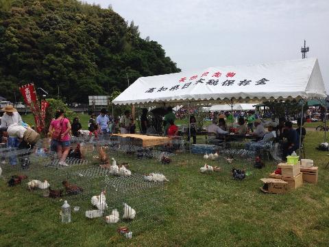 20140503日本鶏保存会02