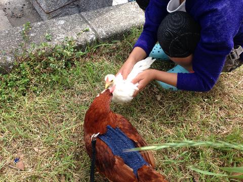 20140503日本鶏保存会13