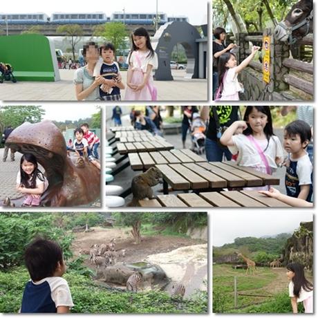 Taiwan zoo-11
