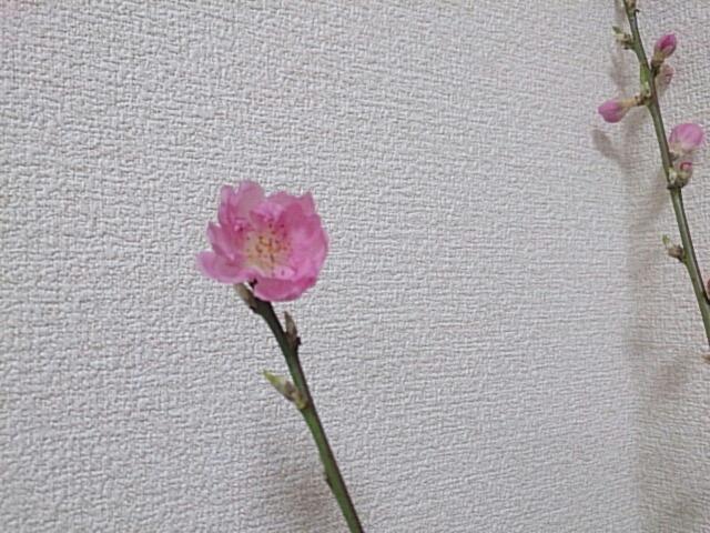 fc2_2014-02-19_22-01-07-952.jpg