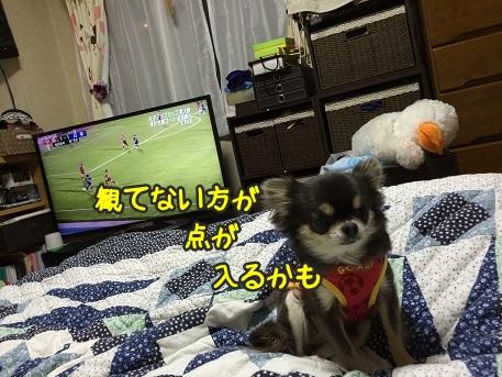 IMG_2616.jpg