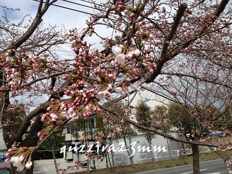 2014初桜4