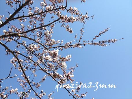 桜7日後ー5