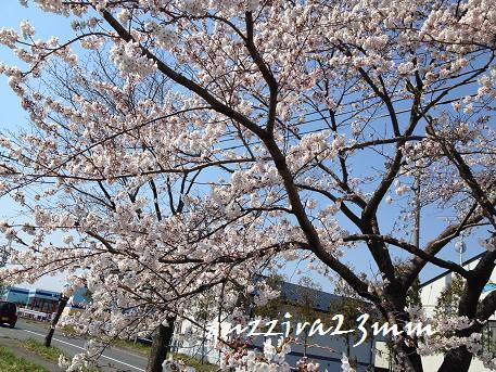 桜7日後ー2