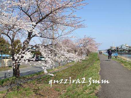 桜7日後ー3