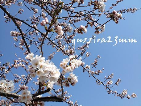 桜7日後ー6