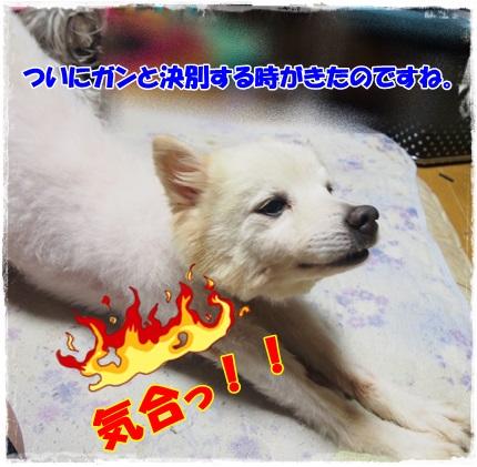 P7140041.jpg