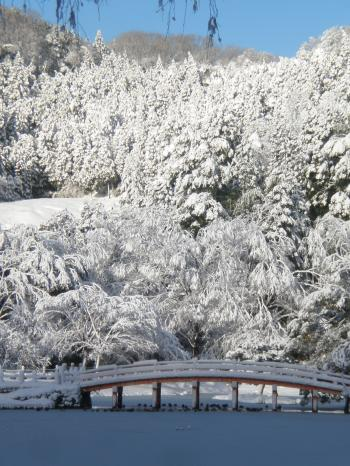 阿弥陀堂の池、冬景色