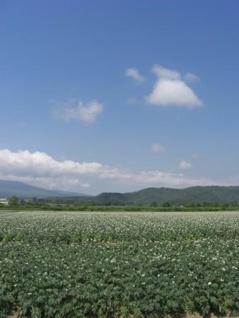 CIMG9700ジャガイモ畑