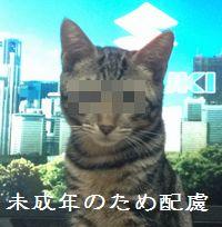 466_3.jpg