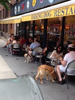 dog cafe 3