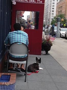 dog cafe2