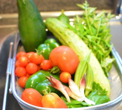菜園の野菜達