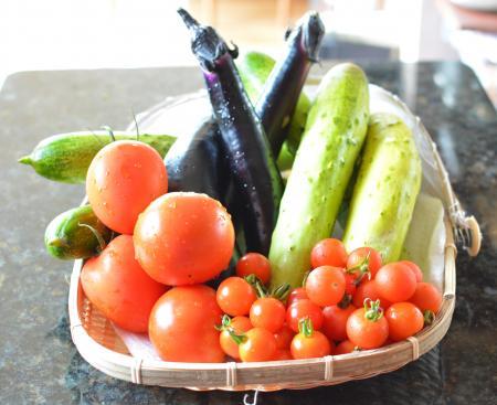 朝どれ菜園の野菜達