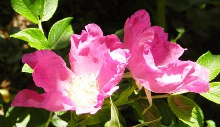 香りの良い花?