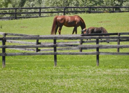 牧場の馬達