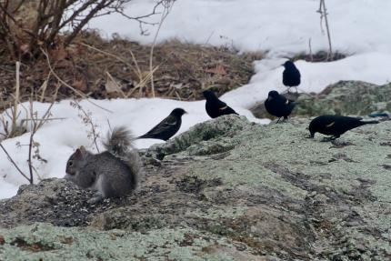 渡り鳥も仲間入り