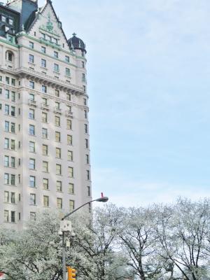 plazahotelと街路樹