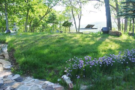 裏庭のチャイブの花