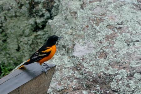 庭に遣って来る小鳥
