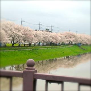 IMG_4042越谷桜小
