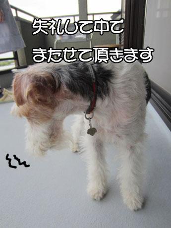 5_201407192257212ba.jpg