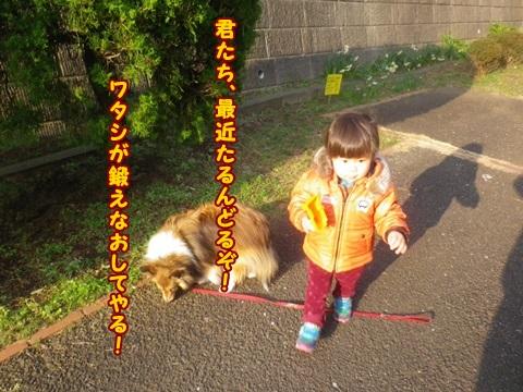 IMGP2362_201403091003188af.jpg