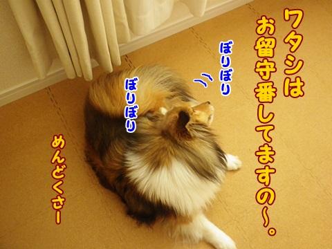 IMG_9742.jpg