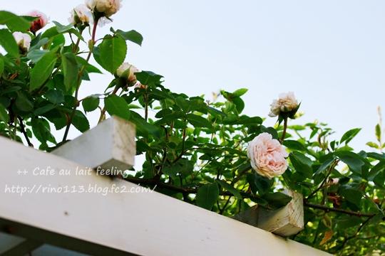 _MG_9457b.jpg