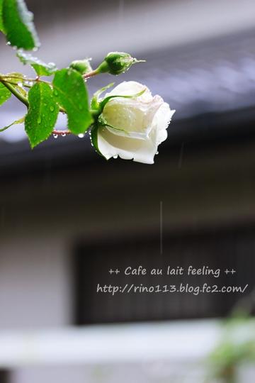 _MG_9623b.jpg