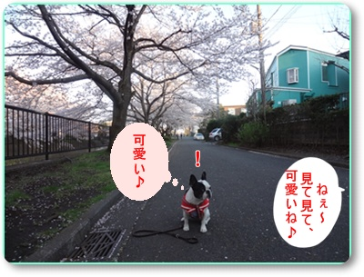 DSC07381.jpg