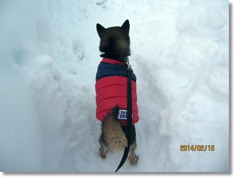 snow-r1.jpg