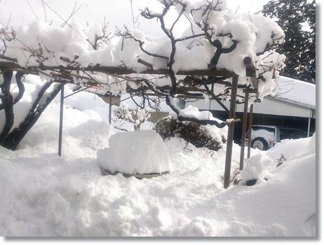 snow0215b.jpg