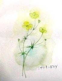 白山花スケッチ5
