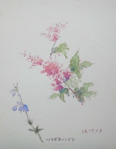 い伊吹山花2