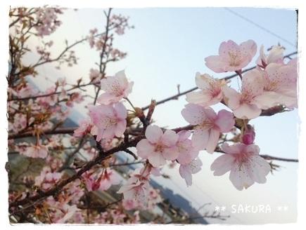 春2014022402