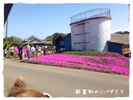 桜2014033001