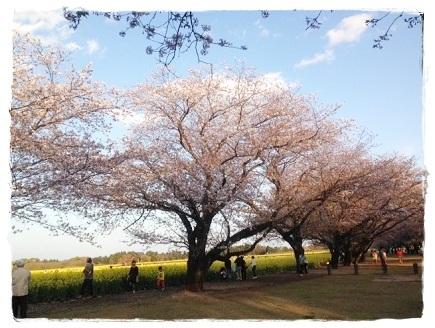 桜2014033002