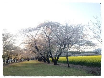 桜2014033003
